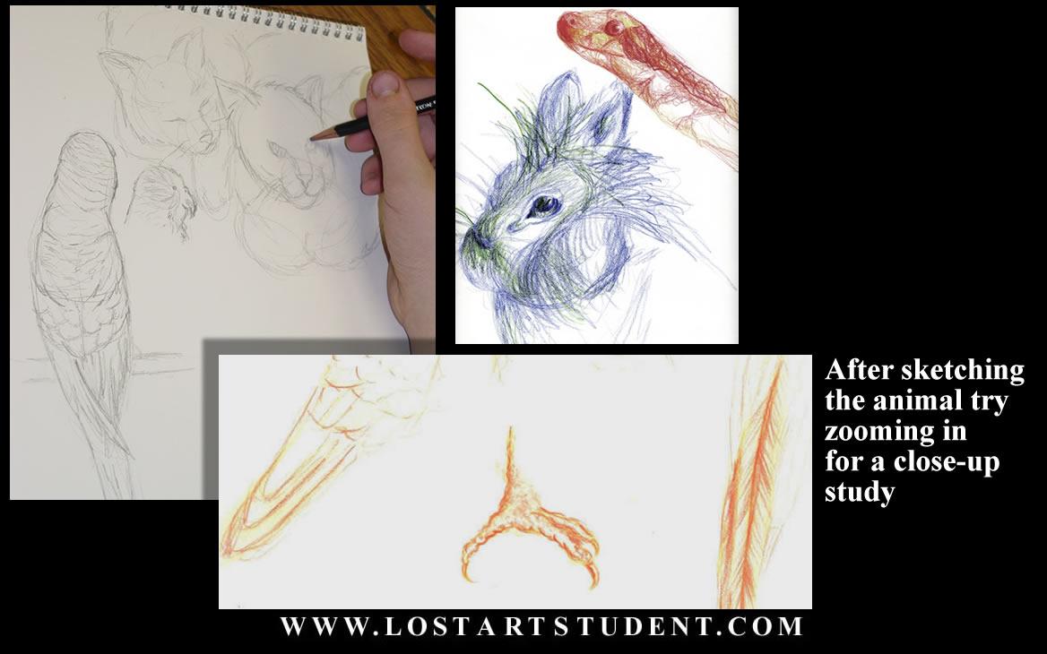Draw animals 0 animal life drawing 1 student animal drawings