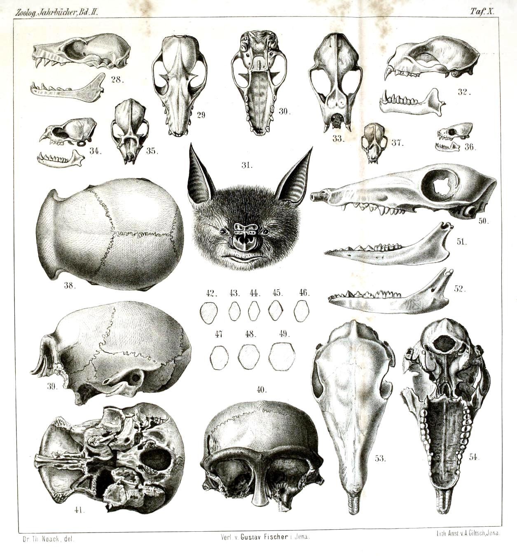 Animal Hybrid & Mask Drawings